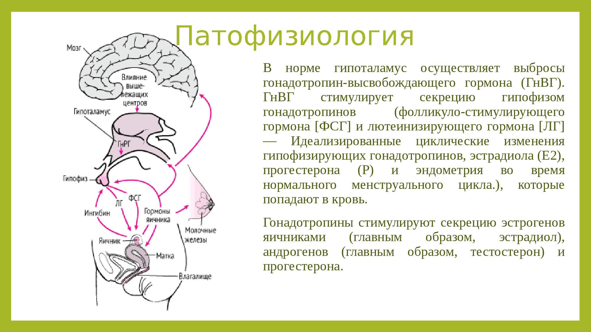 Половые гормоны, андрогены - биохимия