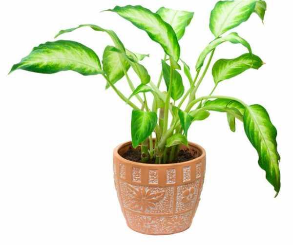 5 комнатных растений, которые защитят вас от болезней