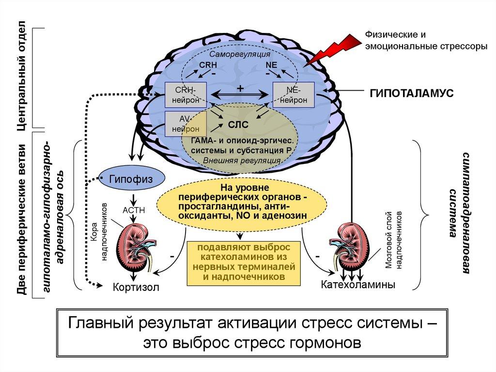 Кортикостероиды - названия препаратов, показания и противопоказания, особенности применения у детей и взрослых, побочные эффекты