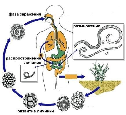 Как избежать инфекции ботулизма? ботулизм в консервации: признаки, профилактика, симптомы болезни и лечение.