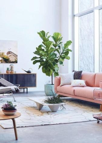 Самые полезные комнатные цветы для дома: очищают воздух и защищают от вредного воздействия