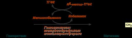 Витамин в12 (цианокобаламин) для чего нужен, где содержится больше всего