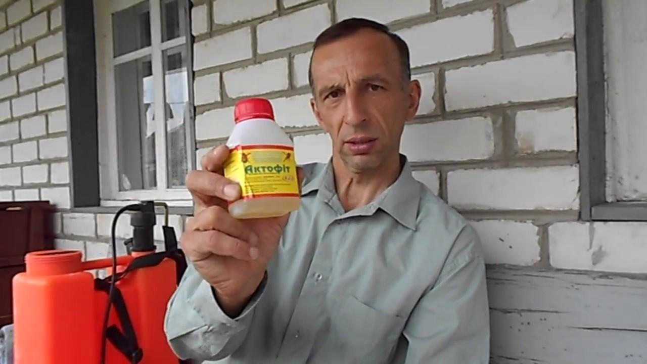 Актофит отзывы. препарат актофит – инструкция по применению, отзывы