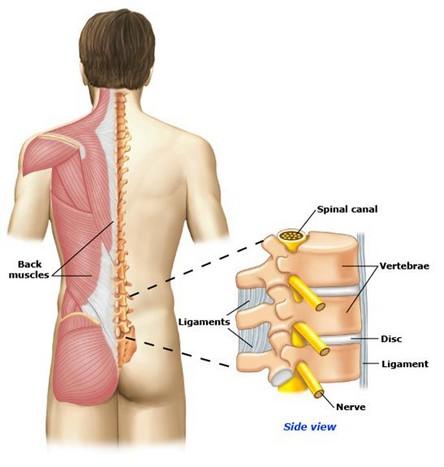 Болит спина сбоку позвоночника