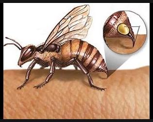 Пчелиный яд (апитоксин) – польза и вред апитерапии, инструкция к применению, препараты (крем софья, бальзам живокост, гель 911, мазь вирапин), лечение различных заболеваний