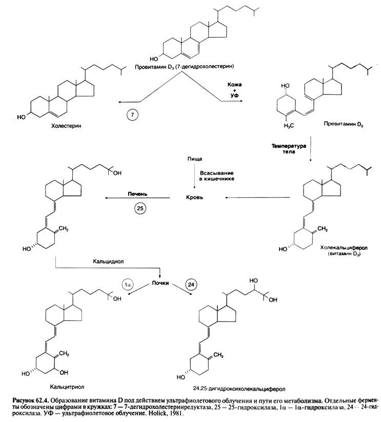 Гормоны кальциевого обмена
