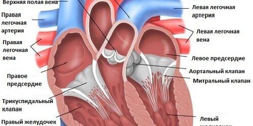 Врожденные пороки сердца. диагностика и лечение врожденных пороков сердца