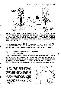 Классификация организмов. вирусы. бактерии. грибы. лишайники.