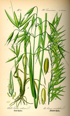 Полезные и эффективные травы от камней в почках