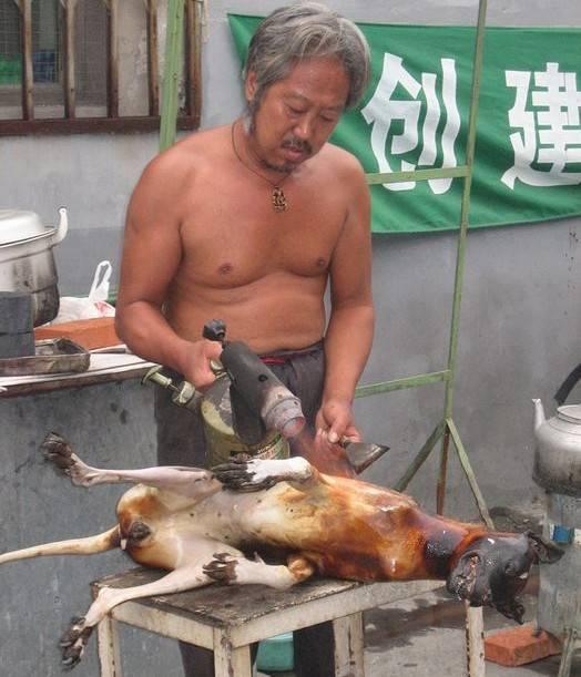 Лечение туберкулеза внутренним собачьим жиром, личный опыт