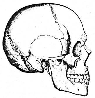 Связь анатомии со смежными дисциплинами