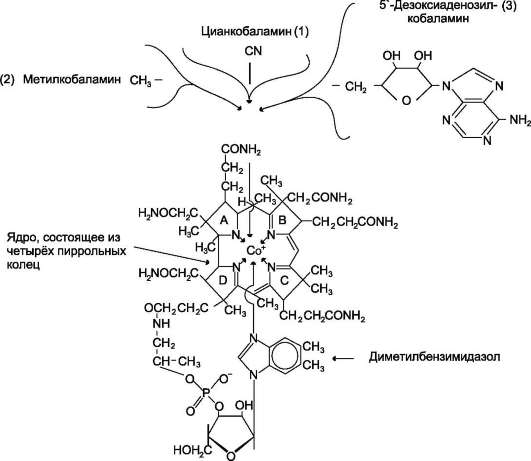 Витамин b12 (кобаламин, цианокобаламин): описание, свойства, польза и вред