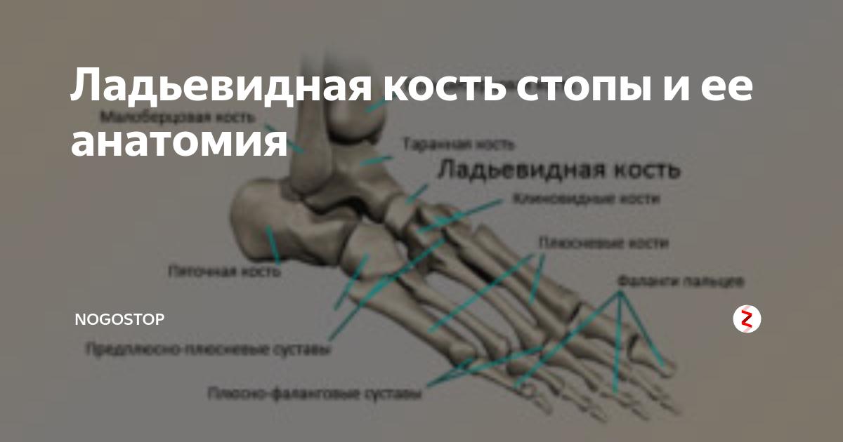 Остеохондропатия: лечение некроза костной ткани разных суставов