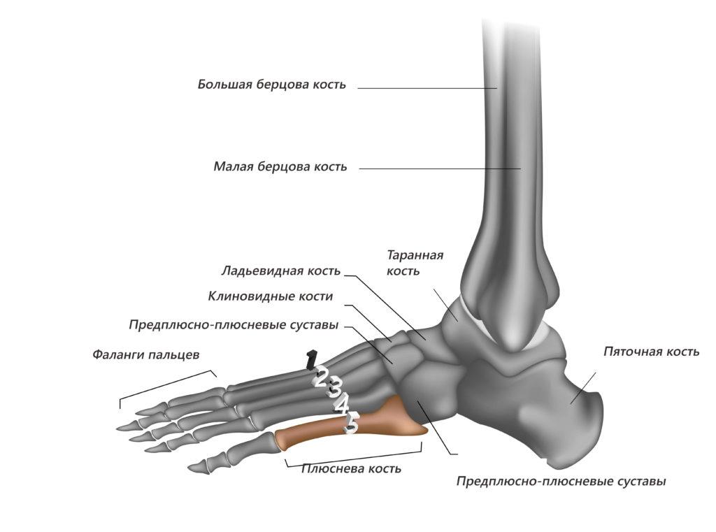 Остеохондропатия ладьевидной кости ступни
