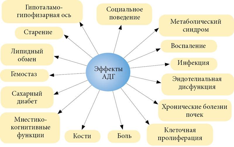 Антидиуретический гормон — википедия. что такое антидиуретический гормон
