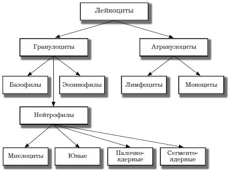 Как по анализу крови установить пневмонию: расшифровка основных показателей