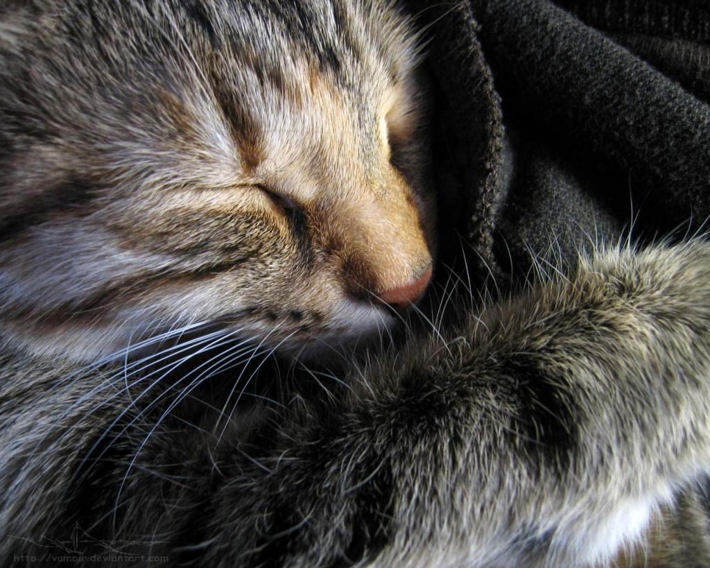 Глаукома — повышенное внутриглазное давление у кошек