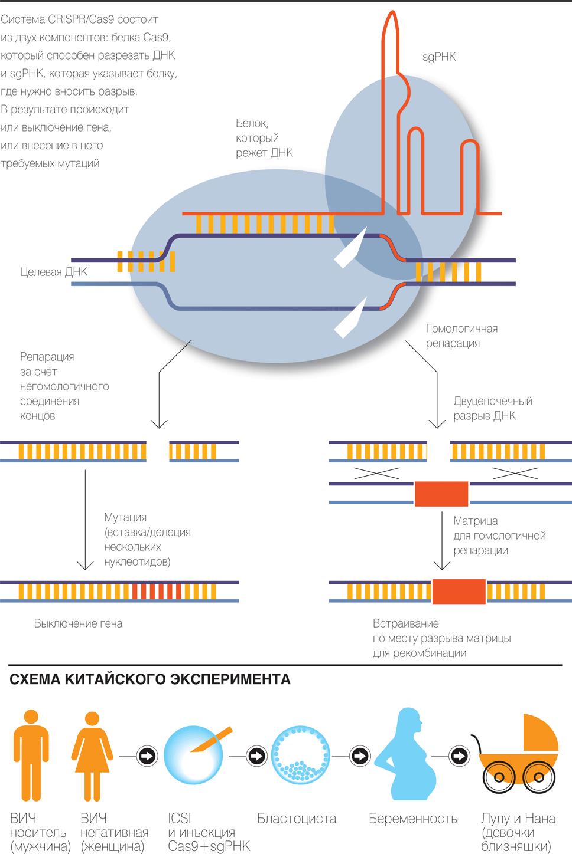 Инженерия против селекции: научный взгляд на гмо