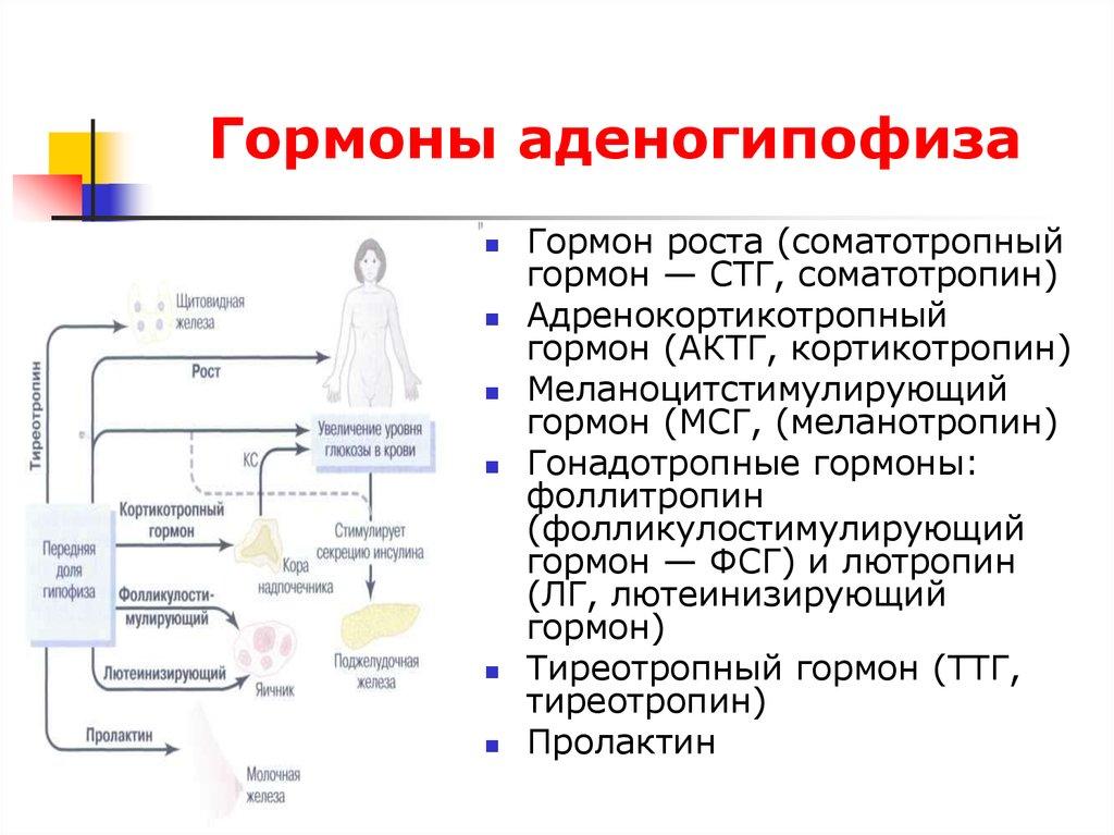 Адренокортикотропный гормон (актг) в крови: анализы, норма, отклонения