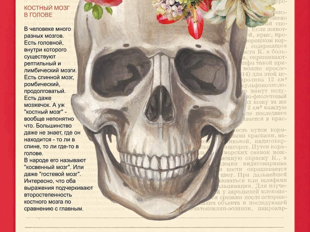 Красный костный мозг - википедия