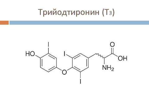 Гормоны щитовидной железы (тиреоидные гормоны) [lifebio.wiki]