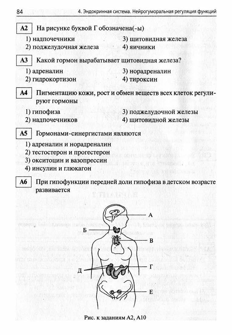 Какие железы есть в теле человека