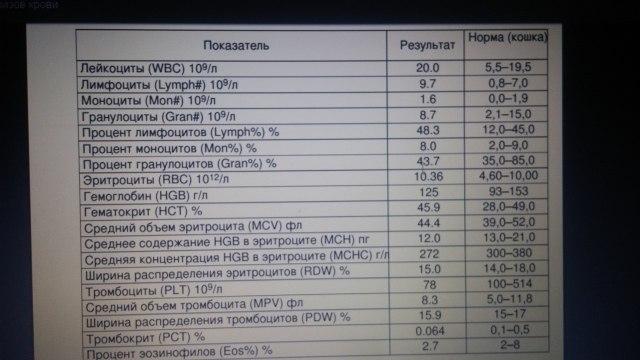 Причины, симптомы, виды лимфоцитоза
