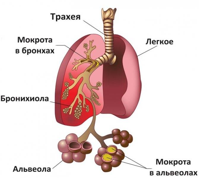 Бромгексин и мукалтин можно принимать одновременно