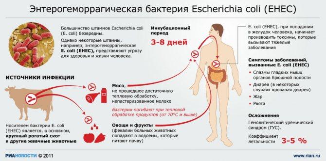 Кишечная палочка – заболевания, пути передачи, симптомы кишечных инфекций и заболеваний мочеполового тракта (у женщины, у мужчины, у ребенка), методы лечения. выявление бактерии в анализе мочи и в мазке из влагалища