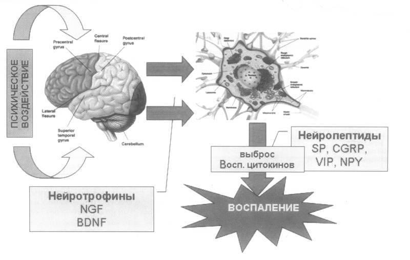 Психосоматика астмы
