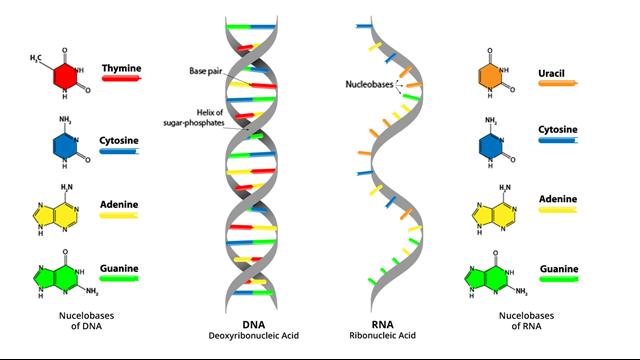 Биомаркеры и молекулярная патология в эпидемиологии, общая характеристика понятия и задачбиомаркера - биомаркеры и молекулярная патология в эпидемиологии
