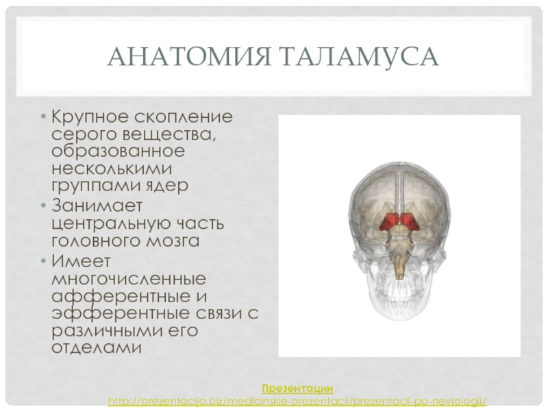 Зрительный бугор или таламус