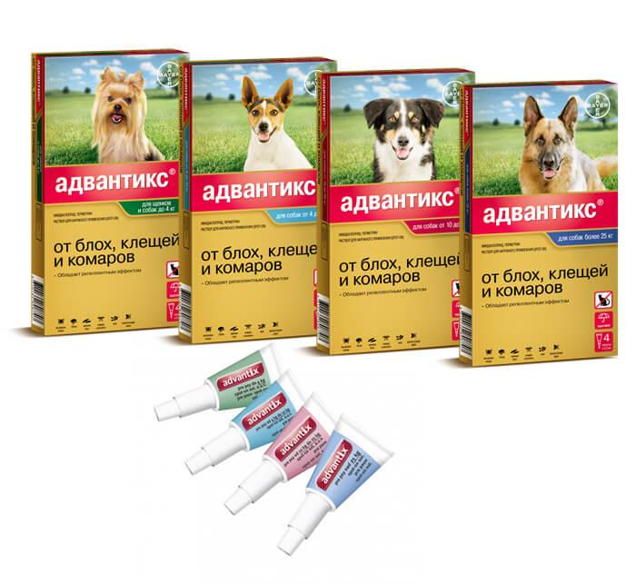 Таблетки бравекто от блох и клещей для собак - инструкция по применению, состав и цена