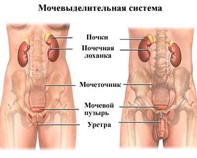 Выделения прозрачные тягучие у мужчин. выделения из уретры – распространенная неприятность среди женщин