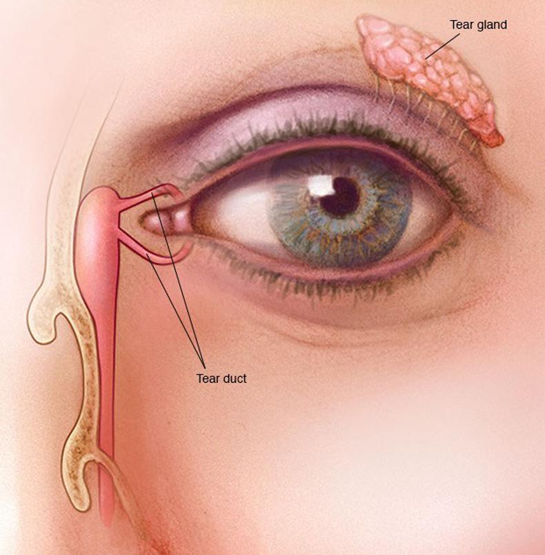 Двоение в глазах   причины и симптомы   двоится изображение по вертикали