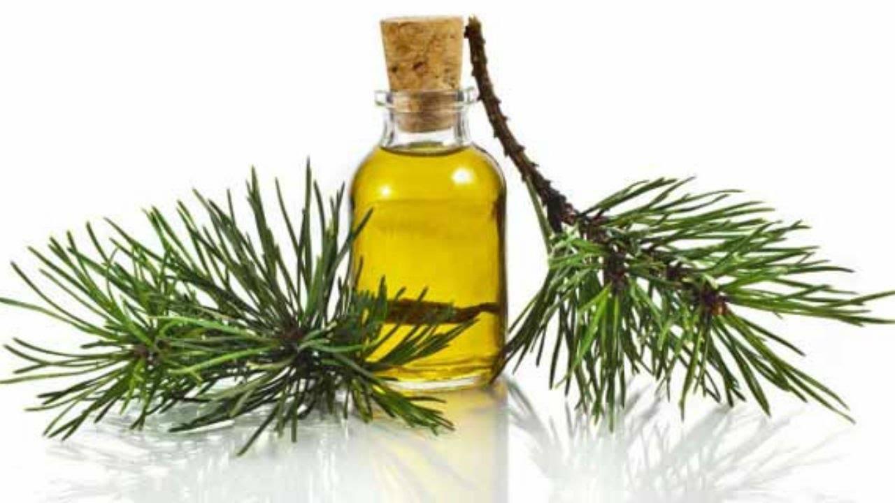 Пихтовое масло — лечебные свойства и противопоказания