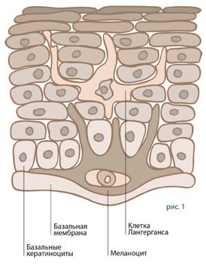 Синтез меланина с точки зрения биохимии, гистологии и физиологии