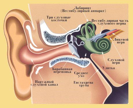 Чем лечить грибок в ушах?