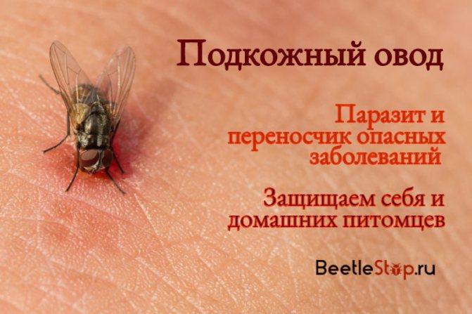 Симптомы паразитов в организме – 12 явных признаков