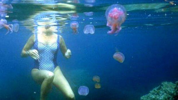 Медуза ужалила способы лечения
