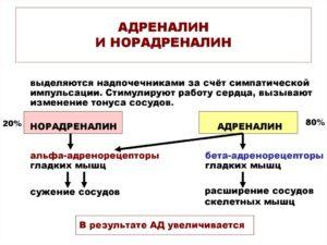 Средства, действующие на периферические адренергические процессы