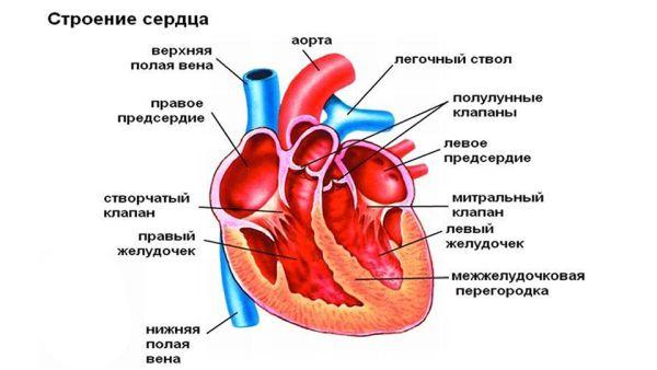 Аневризма брюшной части аорты: причины возникновения, симптомы и лечение