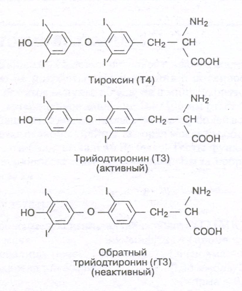 Анализ крови на гормоны щитовидной железы – расшифровка результатов (что означает повышение или понижение каждого показателя): тиреотропный гормон (ттг), трийодтиронин (т3), тироксин (т4), тиреоглобулин, кальцитонин и др.
