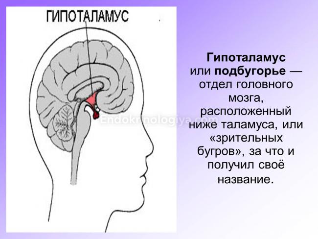 5 зон мозга