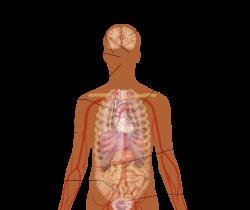 Анафилактический шок – что это? анафилактический шок – причины, симптомы, неотложная первая помощь