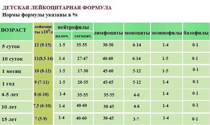 Лейкоциты в крови: норма показателей в таблицах по возрасту