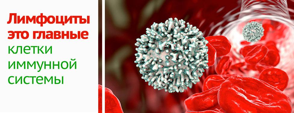 Нейтрофилы понижены у ребенка моноциты повышены. у ребенка нейтрофилы понижены, а лимфоциты и моноциты повышены