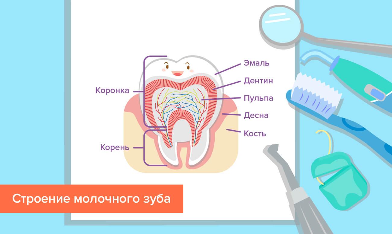 Когда происходит смена молочных зубов