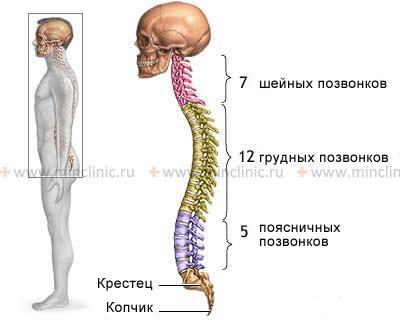 Болезнь бехтерева, или анкилозирующий спондилит: симптомы, причины, лечение