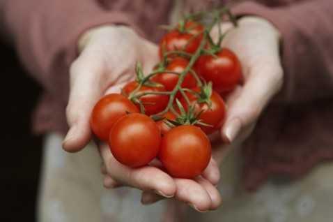Трехдневная диета рис томатный сок. актерская диета - «актёрская диета или как начать ненавидеть рис и томатный сок!!!». соблюдаем диету правильно
